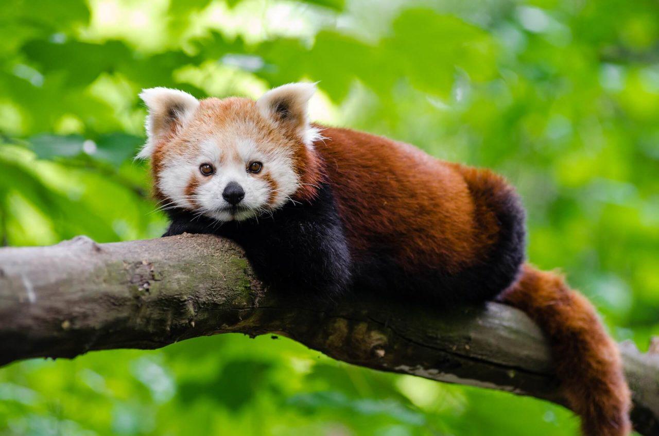 El grupo Mozilla lanza el navegador web gratuito 'Mozilla.org'