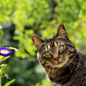 instrucciones para darle una pastilla a un gato