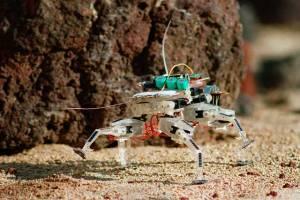 La Araña Robot