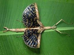 La Evolución del Insecto Palo