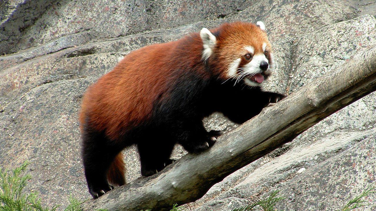 Activar el generador de contraseñas en Firefox Quantum