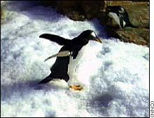 Pingüinos amenazan la primera vivienda construida en la Antártida