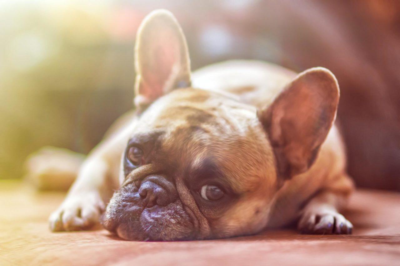 ¿Alguna vez has intentado actuar con filosofía canina?