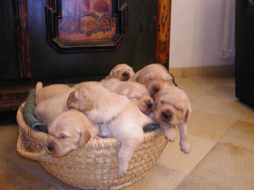 Que bonitos son los perritos!