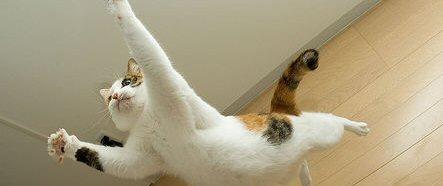 fotos de gatos volando