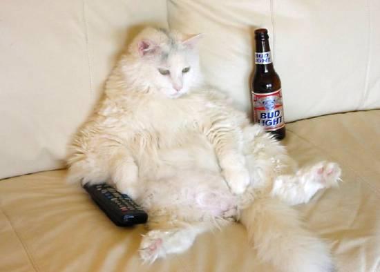 Alejen la bebida del gato