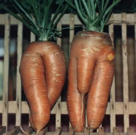 Sexo de las zanahorias