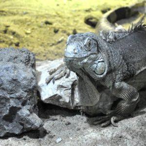 Descubierto en Japon el fosil mamifero mas antiguo del mundo