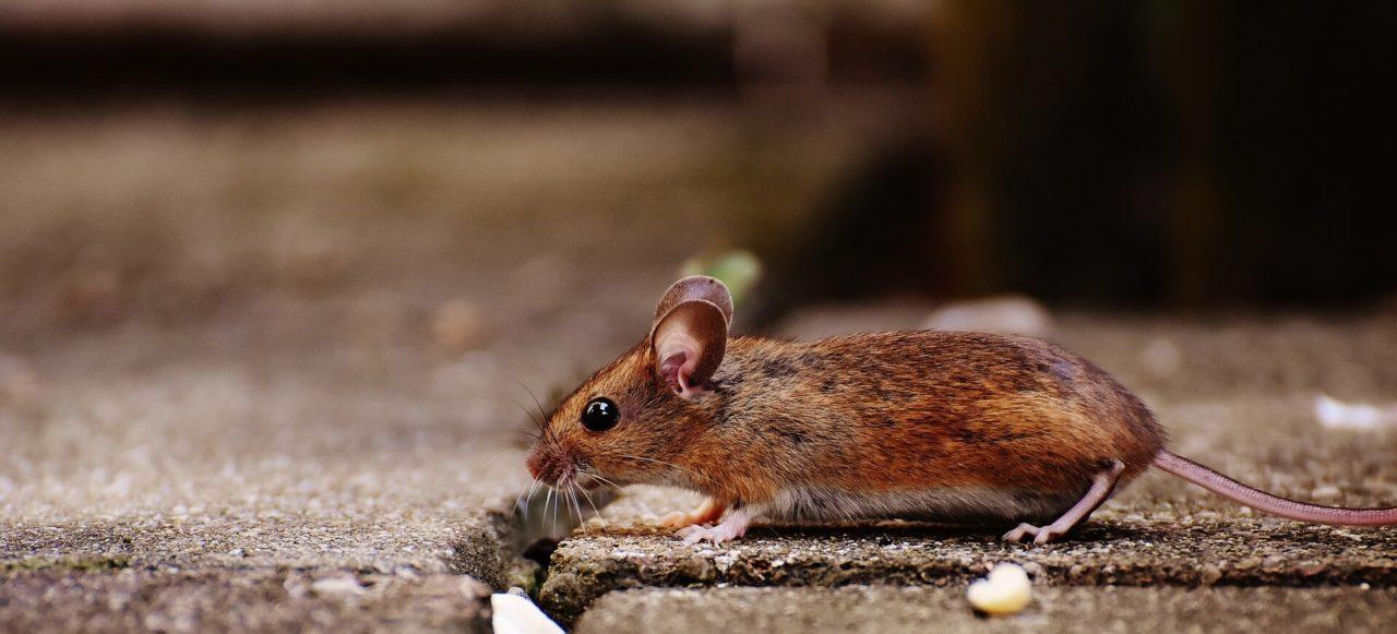 Interpretación de ''Susanita tiene un ratón''
