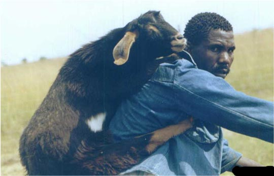 Pasea la Cabra