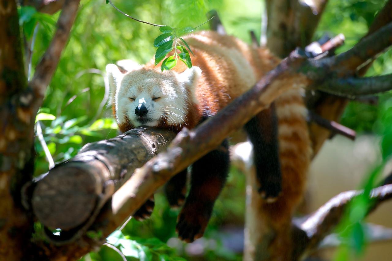 Mis plugins para Firefox