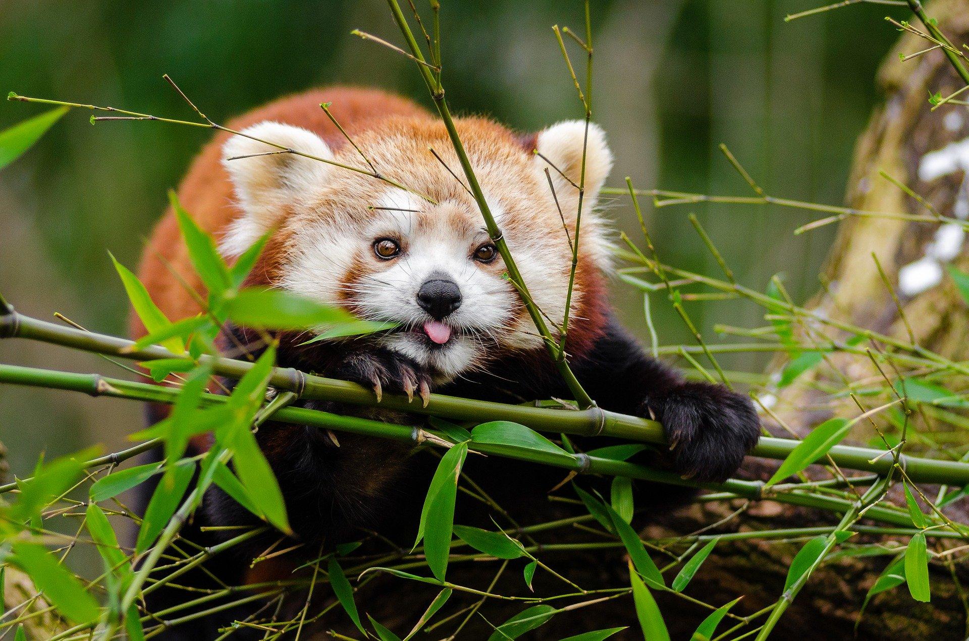 Extensiones para Firefox que recomiendo